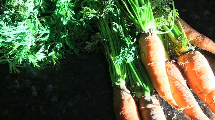 Carrots: From Root to Stem